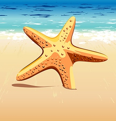 Starfish in sand vector
