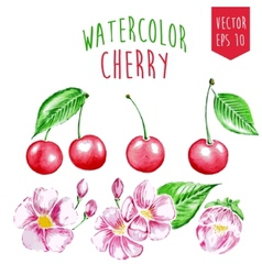 Watercolor cherry elements vector image vector image