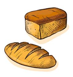 watercolor fresh bread vector image