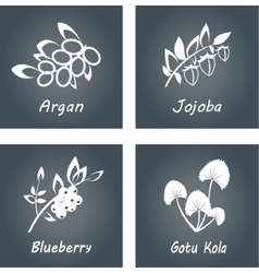 Collection herbs natural supplements argan vector