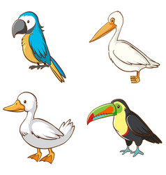 Isolated picture different birds vector