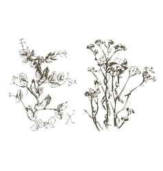 Plant handmade doodle vector