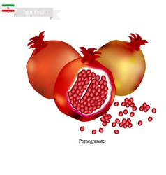 Ripe Pomegranate A Popular Fruit in Iran vector image