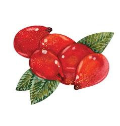 Watercolor Rosehips vector