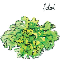 Watercolor salad vector