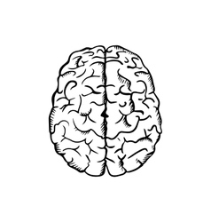 Human brain sketch in ouline style vector image