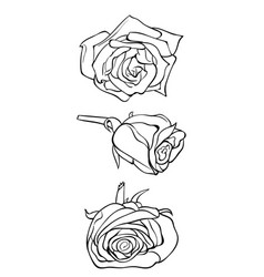 adult coloring bookpage a set of flowers image vector image