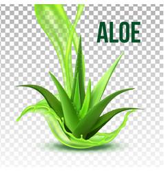 Realistic foliage green plant aloe vera vector