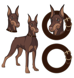 set doberman colored in a collar vector image