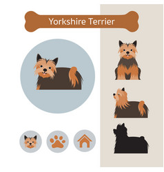 Yorkshire terrier dog breed infographic vector