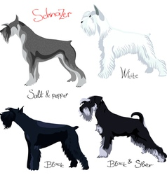 Schnauzer dogs vector