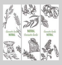 hand drawn cosmetic herbs botanical banner set vector image