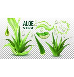 pharmacy succulent aloe vera elements set vector image