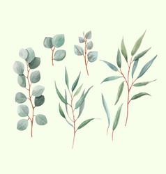 Watercolor australian leaves vector