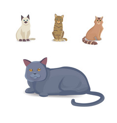 collection cats of different breeds isolated cat vector image vector image