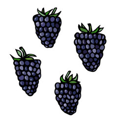 blackberry doodle style sketch isolated on vector image