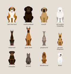 dog breeds set giant and large size vector image