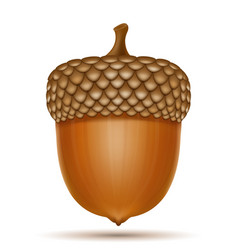 autumn oak acorns vector image