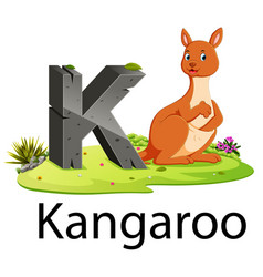 Zoo animal alphabet k for kangaroo vector