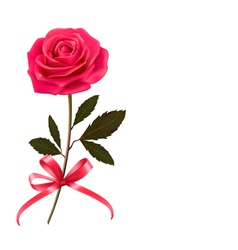 Background with rose and a bow vector image vector image