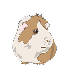 Guinea pig color vector