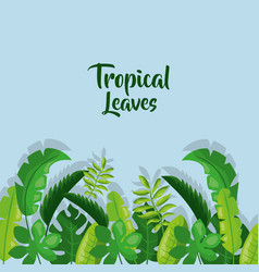tropical leaves border card decoration with shadow vector image