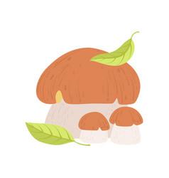 Wild forest edible mushroom eco organic product vector