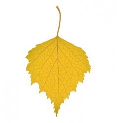 Leaf of a birch vector