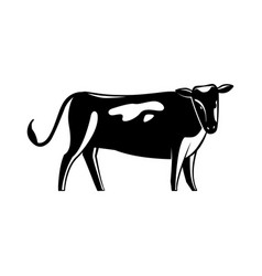 monochrome spotted cow silhouette isolated on vector image