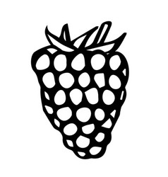 raspberry doodle style sketch isolated on vector image