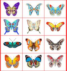 set of summer butterflies vector image