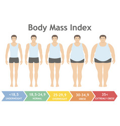 body mass index uderweight to extremely obese vector image