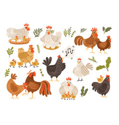 Collection rooster hen and chicks isolated vector