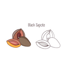 colored and monochrome drawings of black sapote vector image