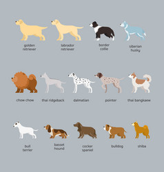 Dog breeds set large and medium size vector