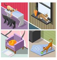 purebred cats isometric design concept vector image