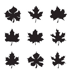 Set of nine Maple-leaf silhouette vector