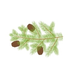 Small Christmas fur-tree branch with natural pine vector image