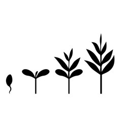 Sprouts plants icon set vector