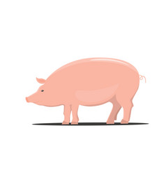pig color cartoon isolated vector image