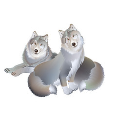 Fantasy drawing couple two wolves gentle vector