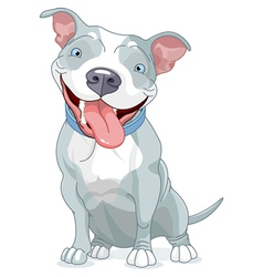 Pit Bull Dog vector image