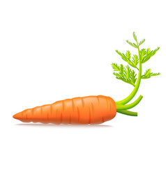 realistic detailed 3d carrots with leaves vector image