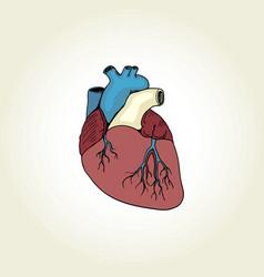Realistic heart vector