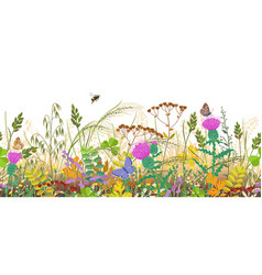 seamless border with autumn meadow plants and vector image