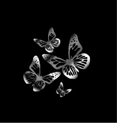 Silver colored butterflies flying on black vector image vector image