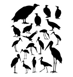 stork and vulture birds animal detail silhouettes vector image