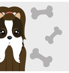 dog pet bone icon vector image