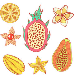 tropical fruit elements set colorful graphic food vector image