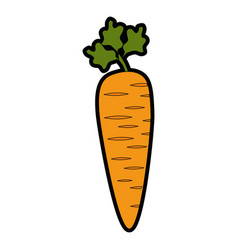 delicious and fresh carrot vector image